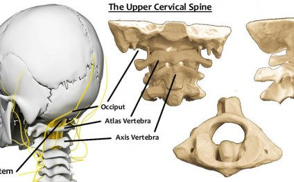 Known as the upper cervical