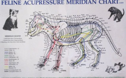 Canine Acupuncture Chart